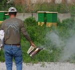 Urban beekeeper's expansion pays off during pandemic