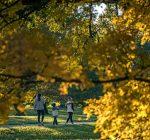 Morton Arboretum ready to celebrate fall